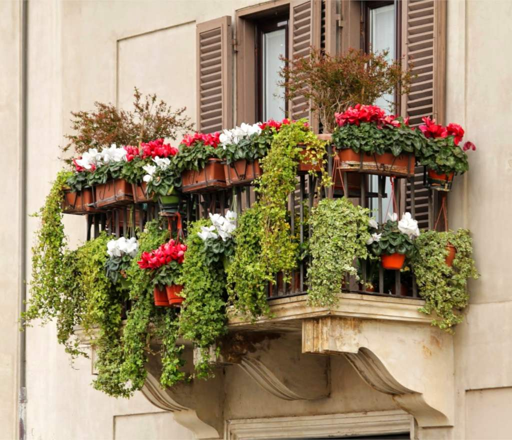 Plants for your Balconies