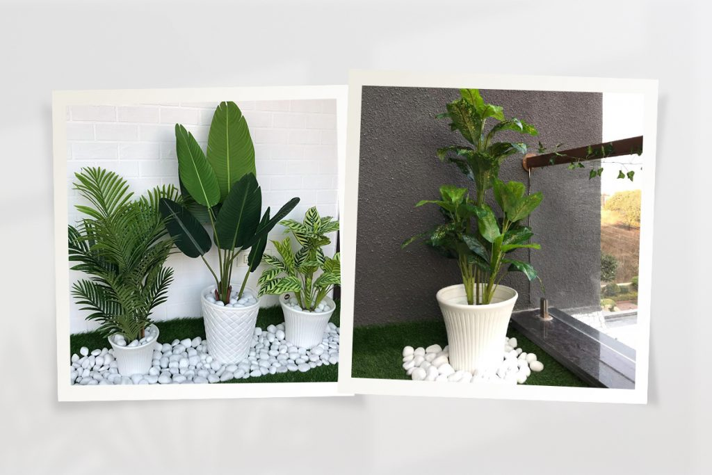 Plant at home