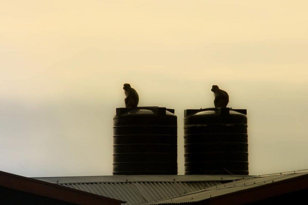 Vectus Overhead Water Tanks